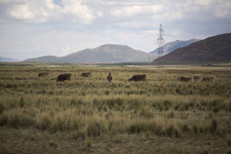 Farmer, Mountains, Peru