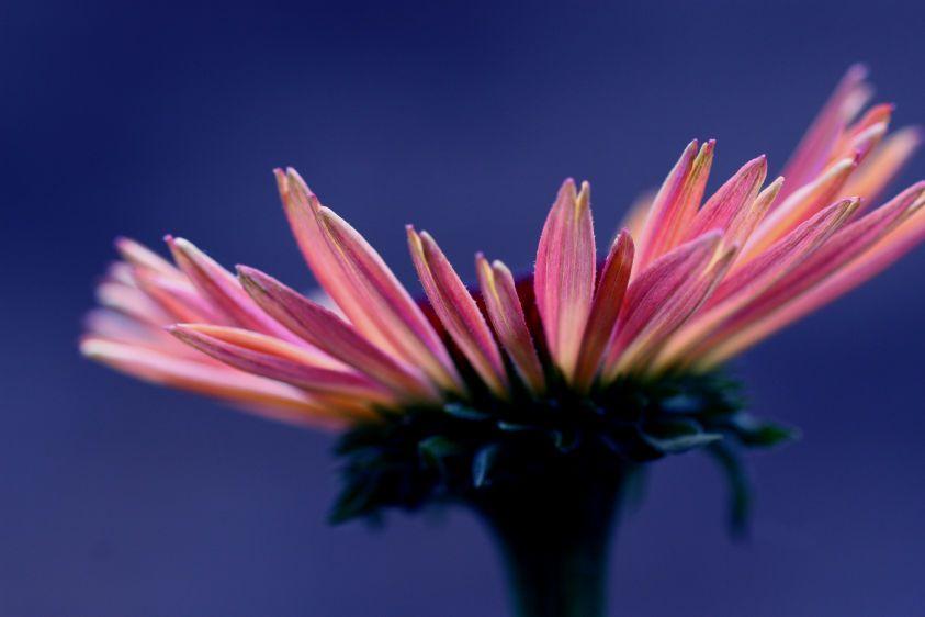 1Coneflower_Profile.jpg