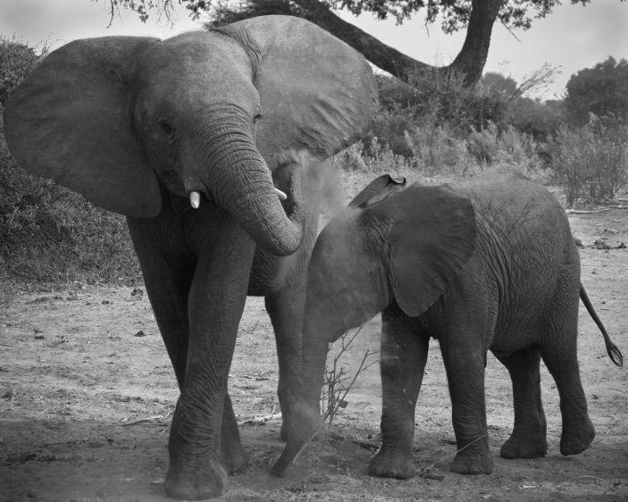 1img_3609_edited_2_elephants_.jpg