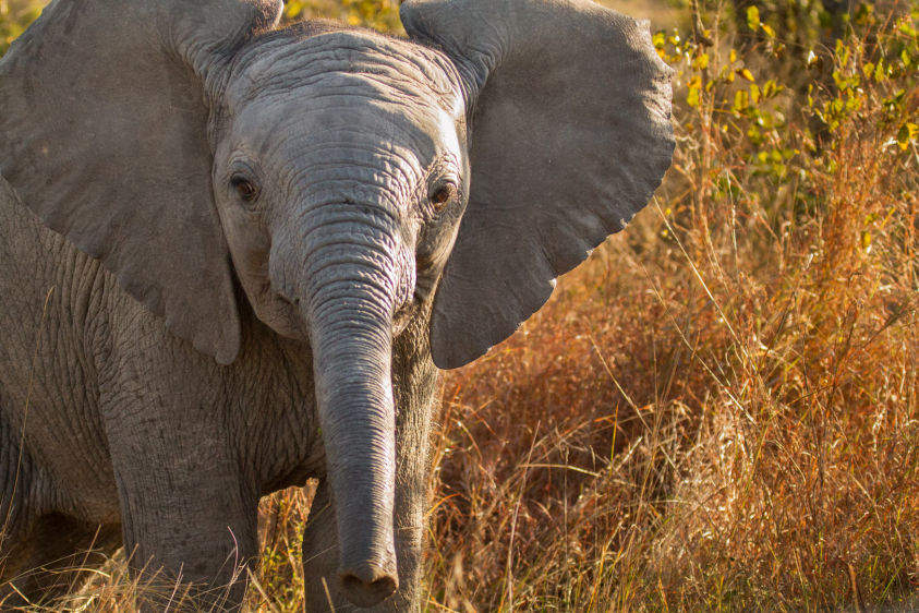 1img_0909_elephants.jpg