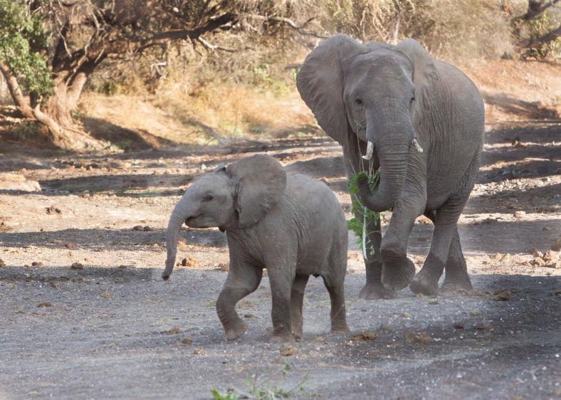 1img_9462_mashatu_elephants.jpg