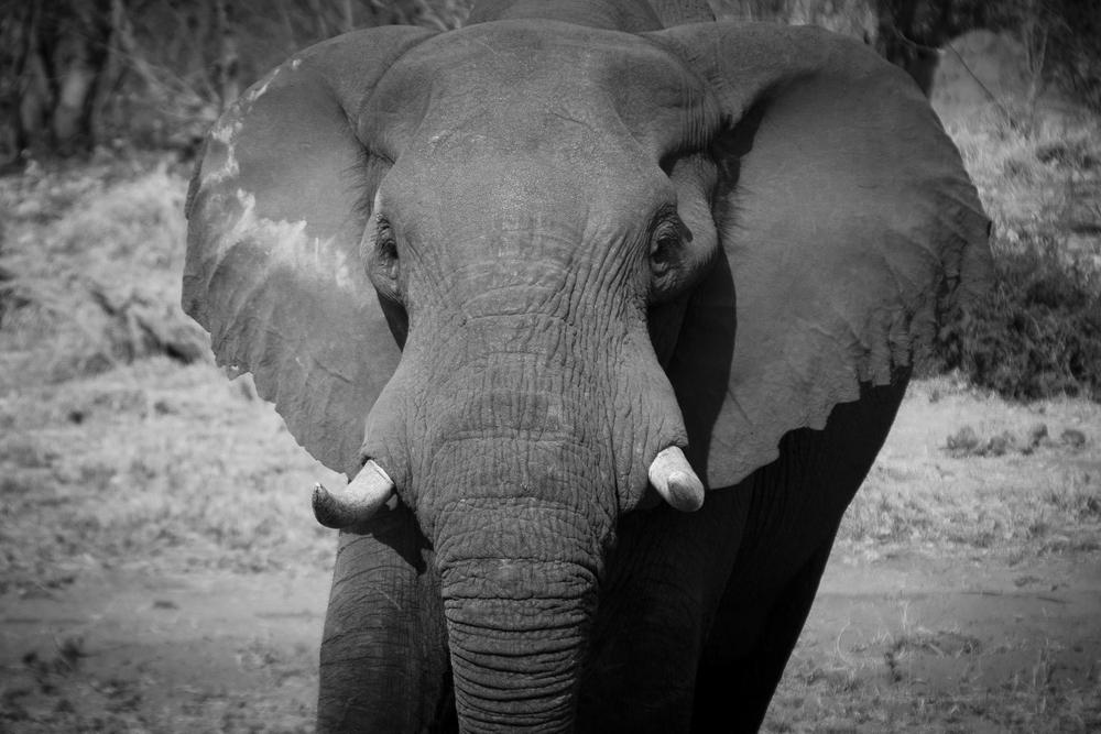 1_mg_0236_elephants_botswana_2006.jpg