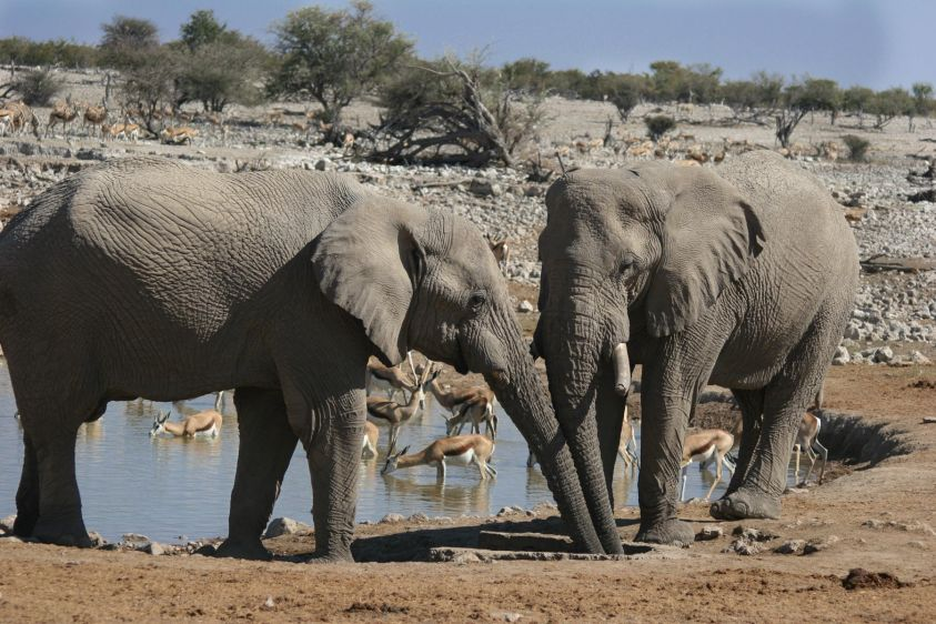 1img_2890_elephants_etosha_namibia.jpg