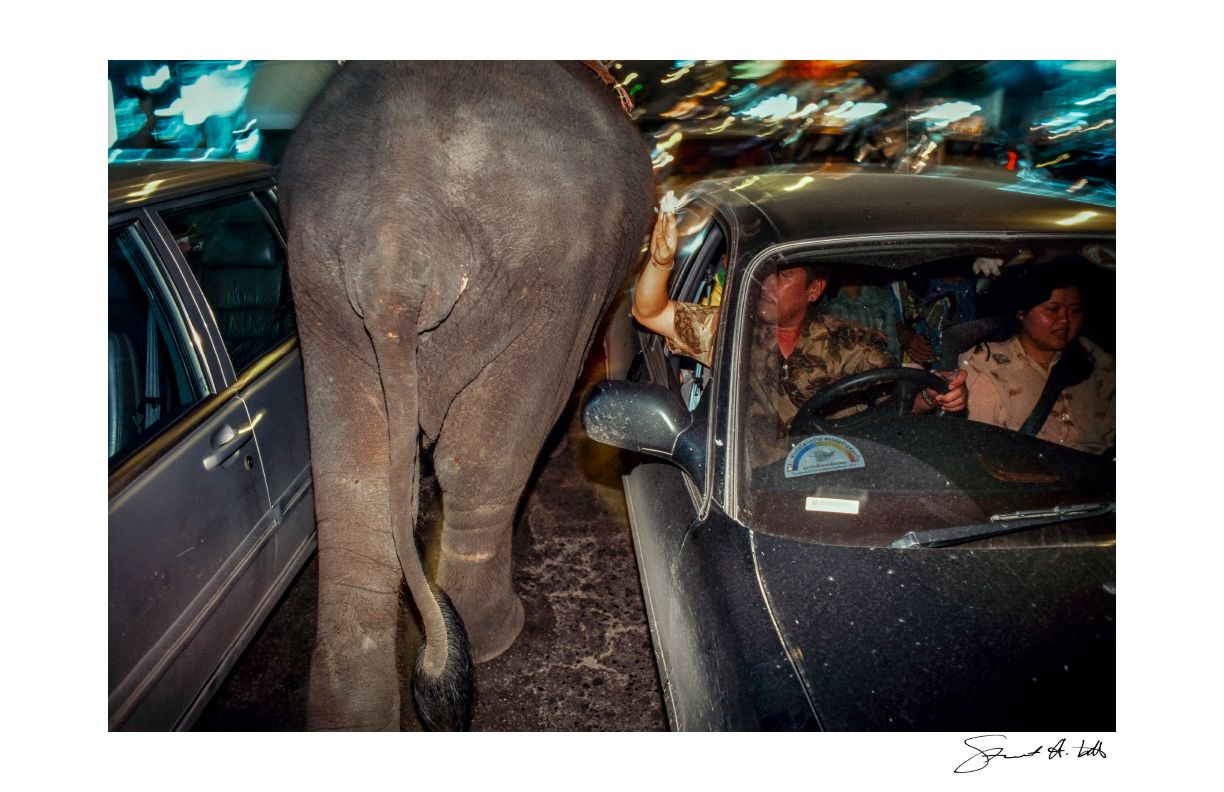 Lightroom (elephant.BKK_01.tif) copy.jpg