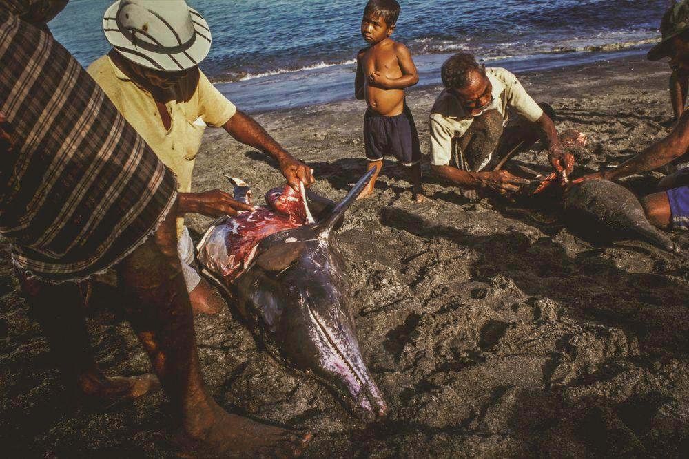 whaling.indonesia_38.jpg