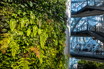 Amazon Spheres, Seattle
