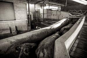 beef.process_03.jpg