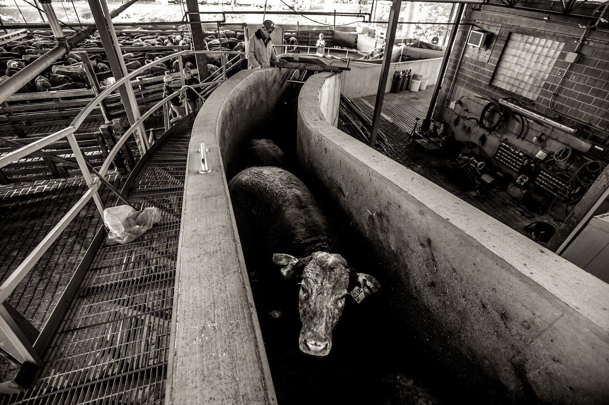 beef.process_04.jpg