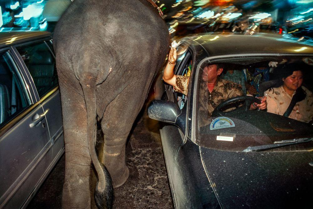 elephant.BKK_01 copy.jpg