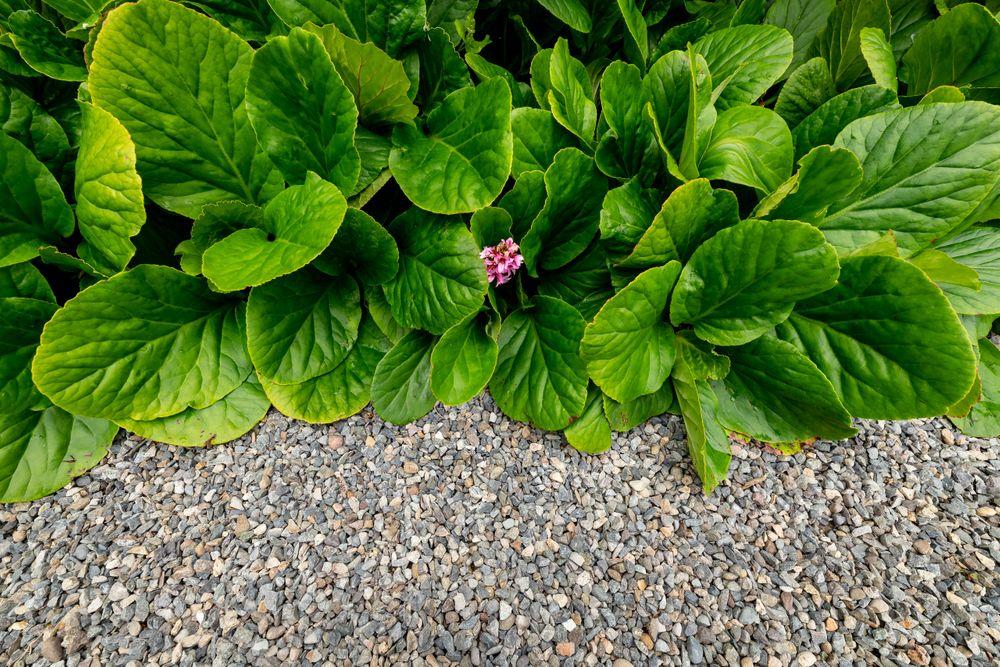 garden.back_203.jpg