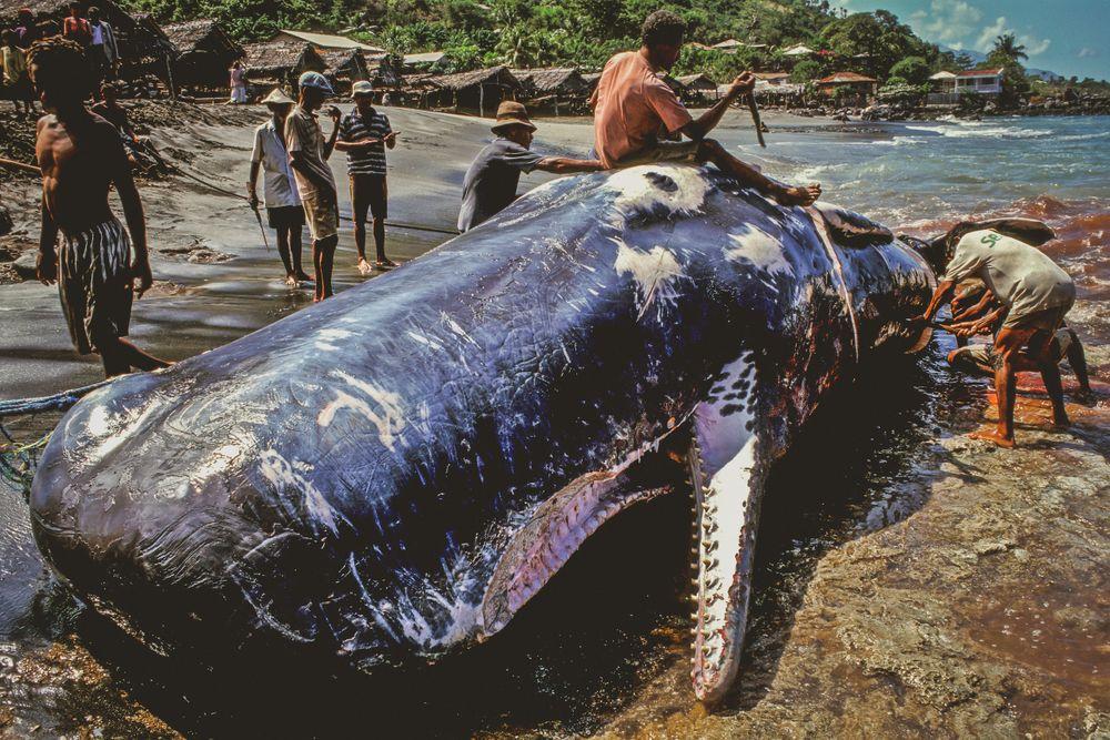 whale_016 copy.jpg