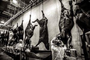 beef.process_08.jpg