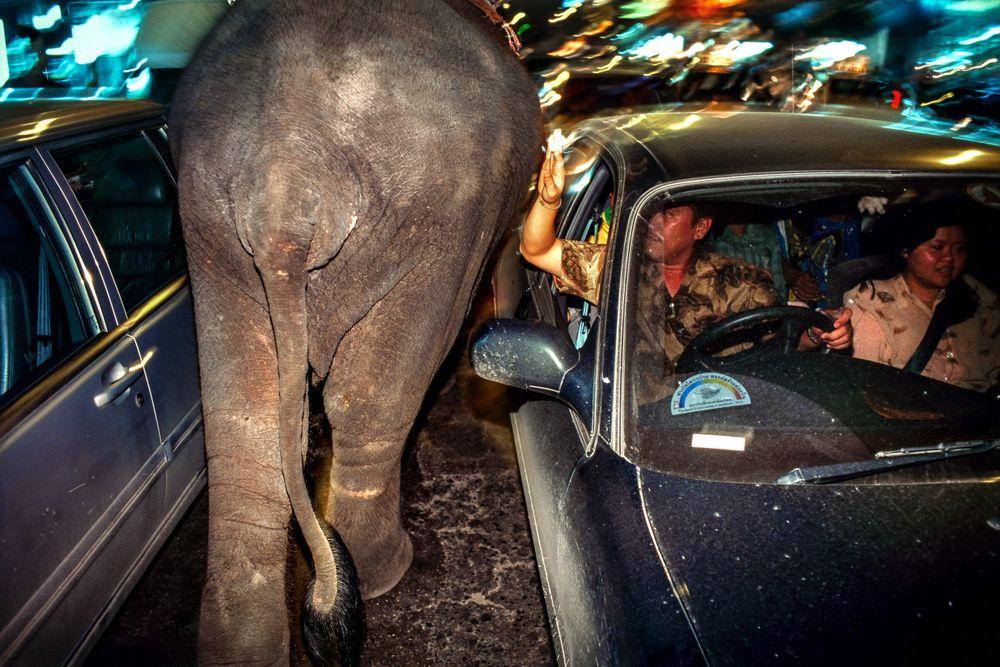 Urban elephant. Bangkok, Thailand