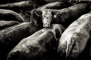 beef.process_02.jpg