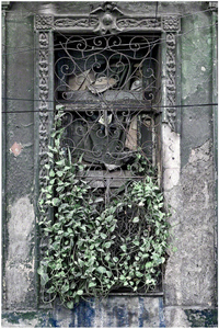 Window And Leaves
