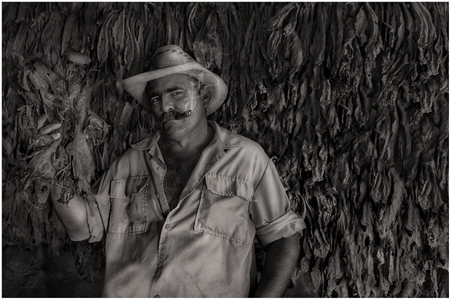 Proud Tobacco Farmer