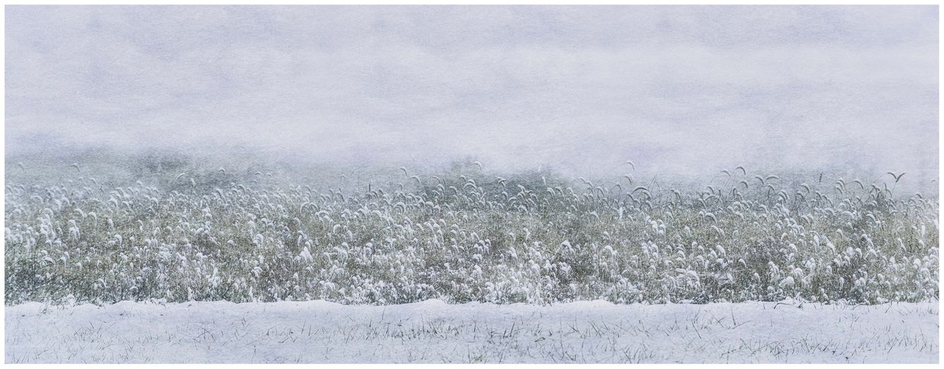 20110108_snowfall_0045_texture.jpg