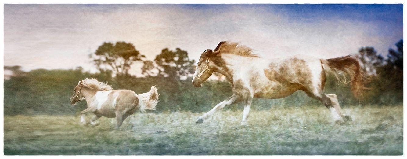 20170604_horses_0012_hi_res_cropped_pr.jpg
