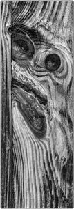 Faces in Wood