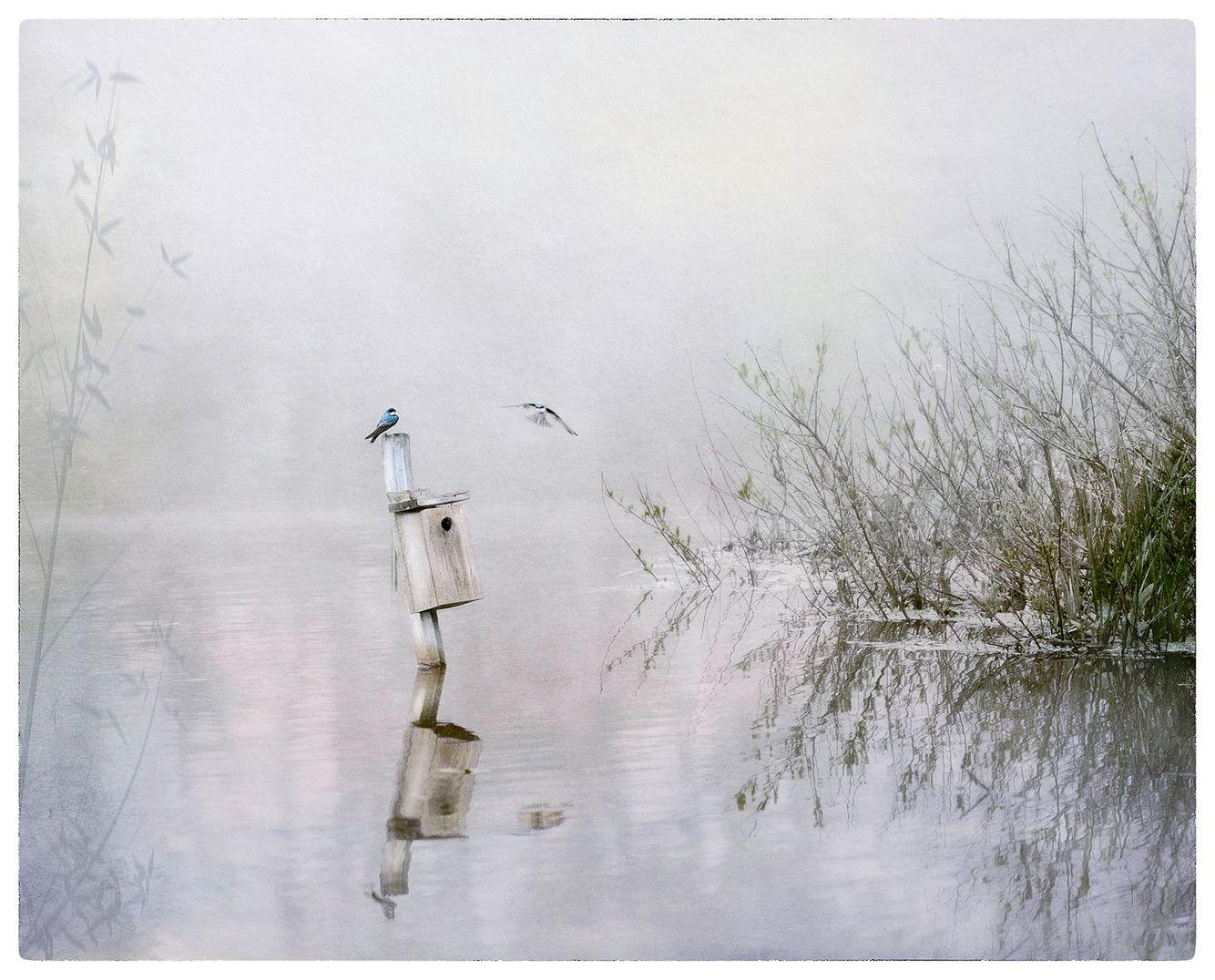 20170501_flemington_fog_0027_11 x 14_mat.jpg