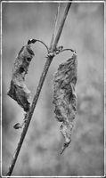 16_1r20121025_plants_0031.jpg
