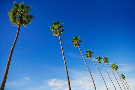 Palm Trees Against Blue Sky - Travel Photographer New York