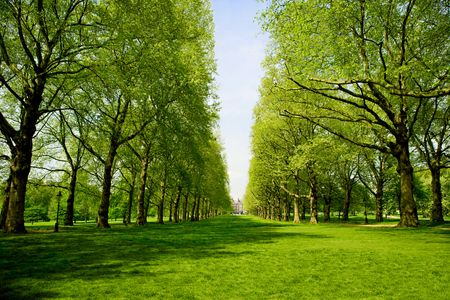 Green Park in London - Travel Photographer New York