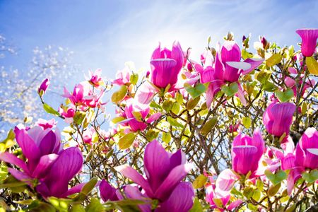 Pink Flowers Against Sky - Travel Photographer New York