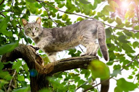 Cat in Tree - Travel Photographer New York