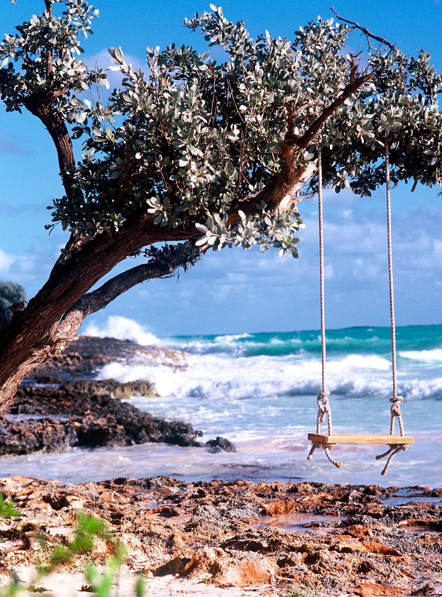 Tree Swing at Beach