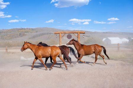 Horses on Paramount Ranch - Travel Photographer New York