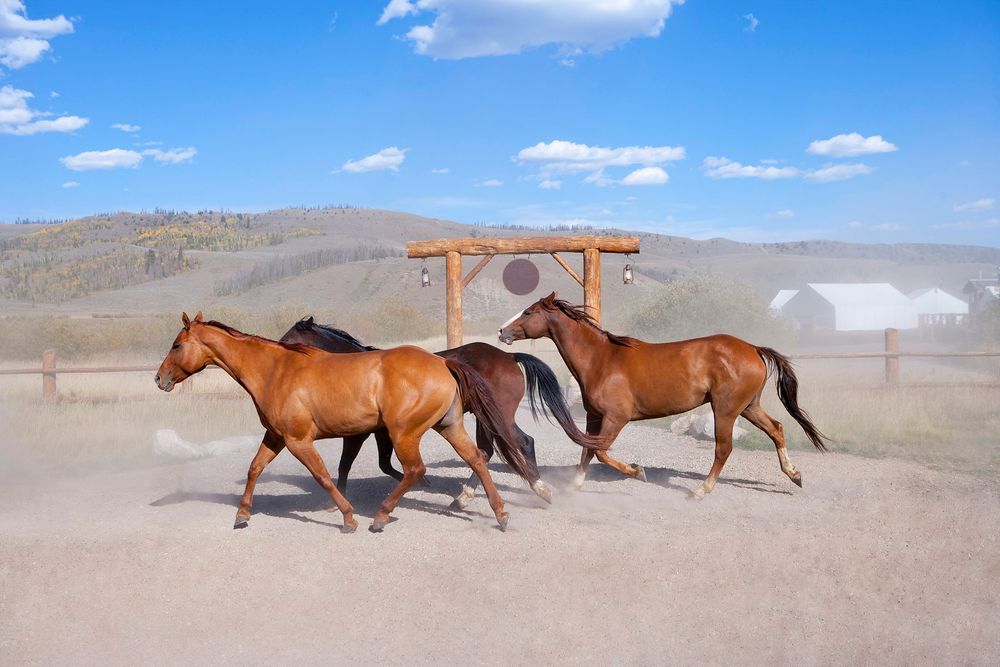 Horses on Paramount Ranch