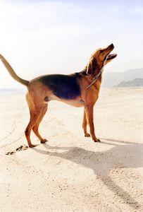 Animal Fair Magazine Charlize Theron Dog
