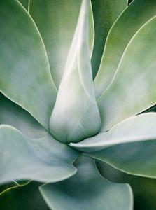 Green Succulent Close Up - Travel Photographer New York