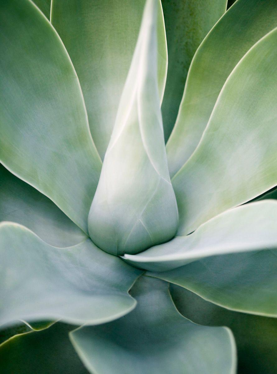 Green Succulent Close Up