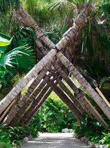 Crossed Palm Trees - Travel Photographer New York