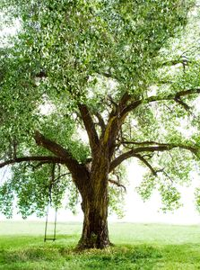 Tree with Swing in Field - Travel Photographer New York