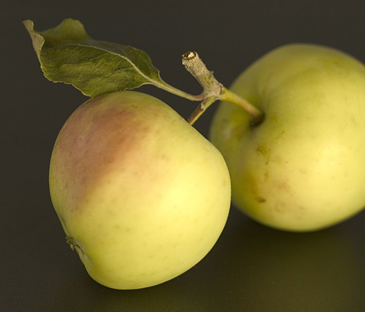 1rethemeyer_2_apples_fruit.jpg
