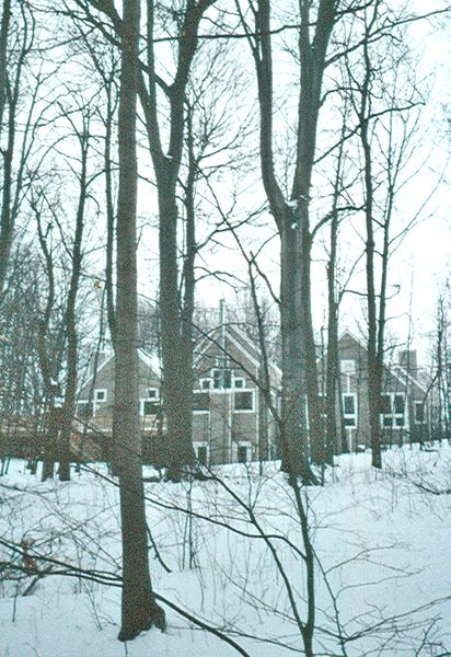 Harris House Backyard . Elevate Studio: Architect of Record.jpg