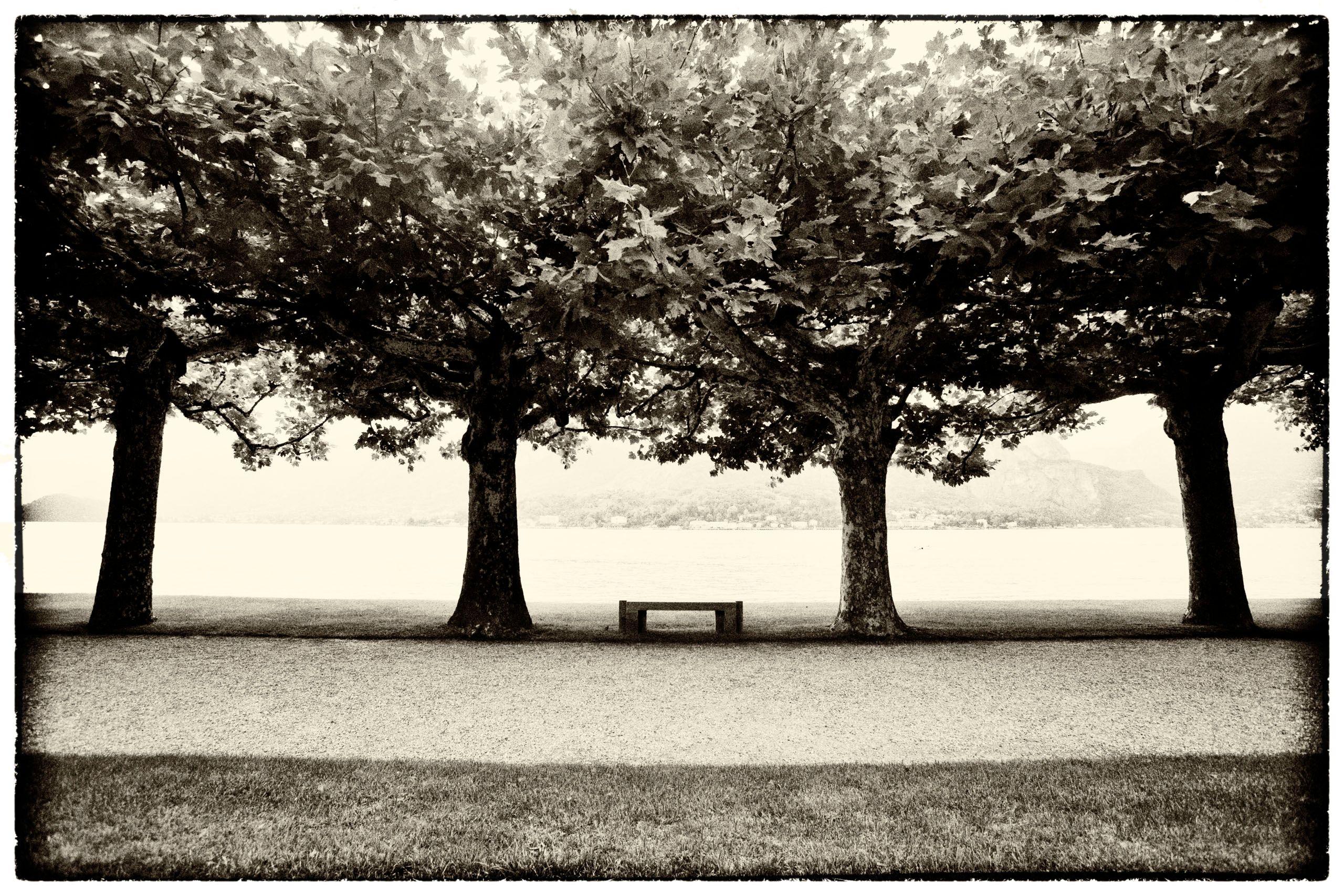 Bellagio Trees.JPG