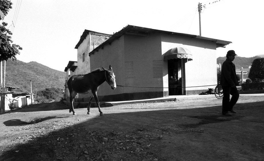 BURRO AND MAN