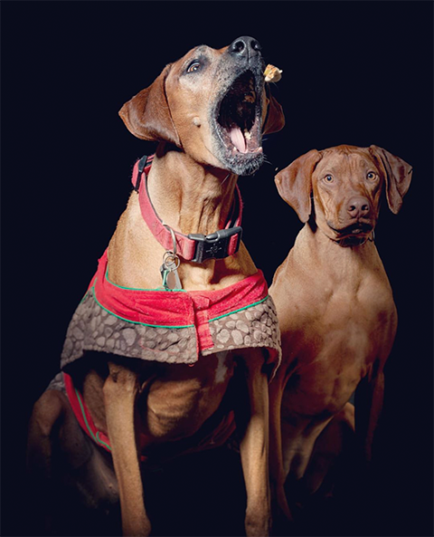dogs website.png