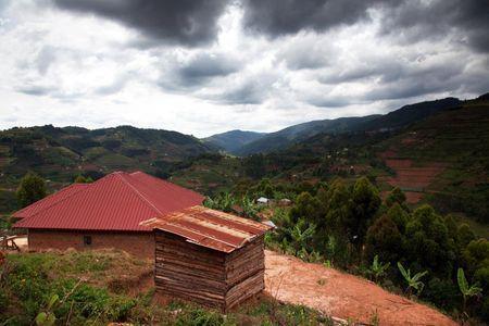 1tea_plantations_uganda_020316_01_web.jpg