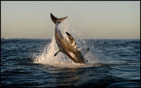 1jack_shark_290607_18_web.jpg