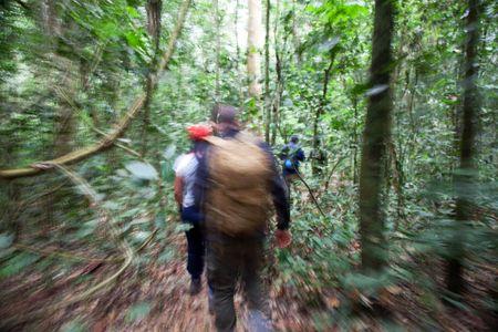 1chimpanzee_trekking_uganda_270216_14_web.jpg