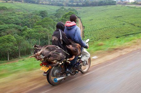 1motorbike_pigs_uganda_260216_01_web.jpg