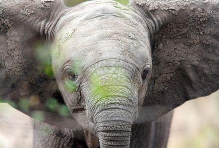 1baby_elephant_uganda_280216_03_web.jpg