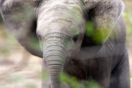 1baby_elephant_uganda_280216_01_web.jpg