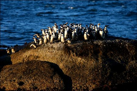 1south_africa_penguins_02_web.jpg