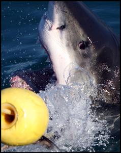 1jack_shark_290607_16_web.jpg